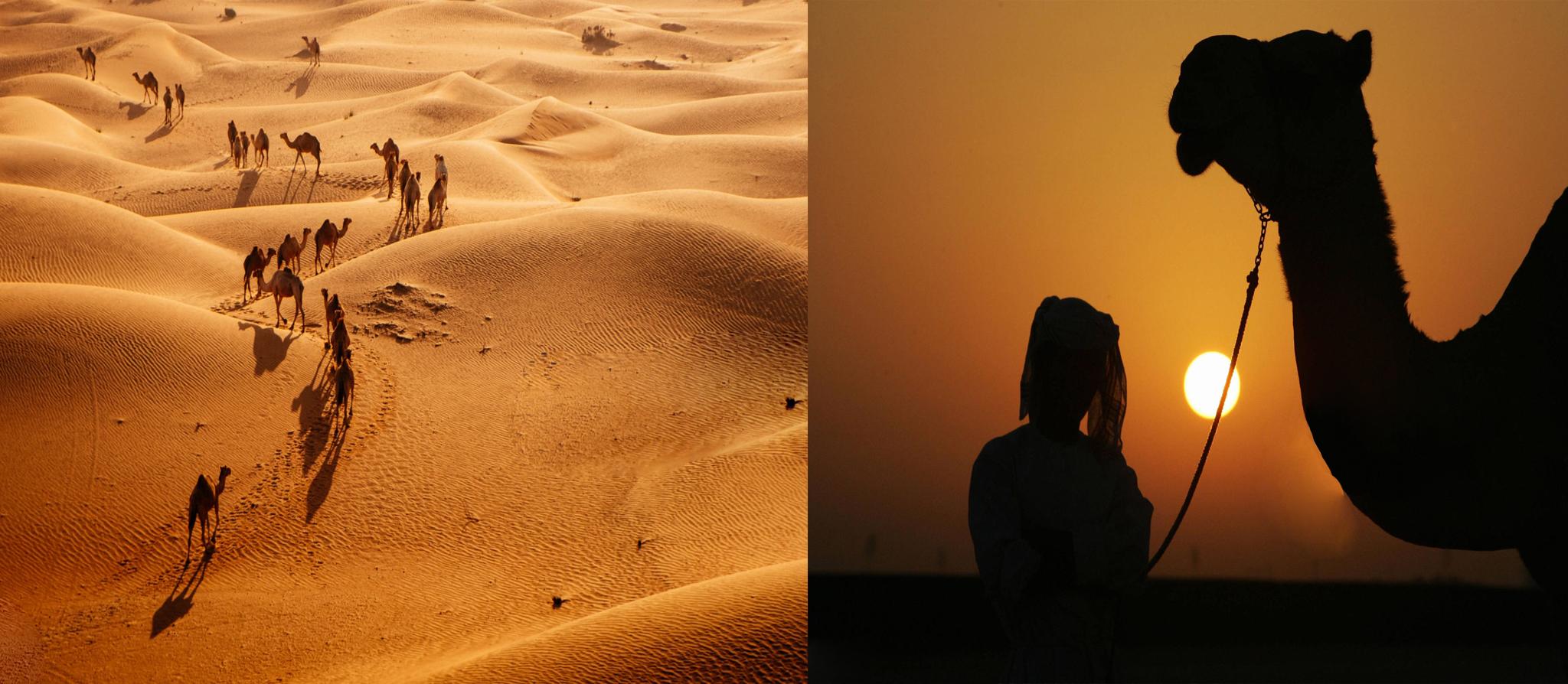 Camel Trekking Dubai deals